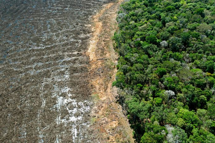 Deforestation in Brazil is advancing at a rapid pace.