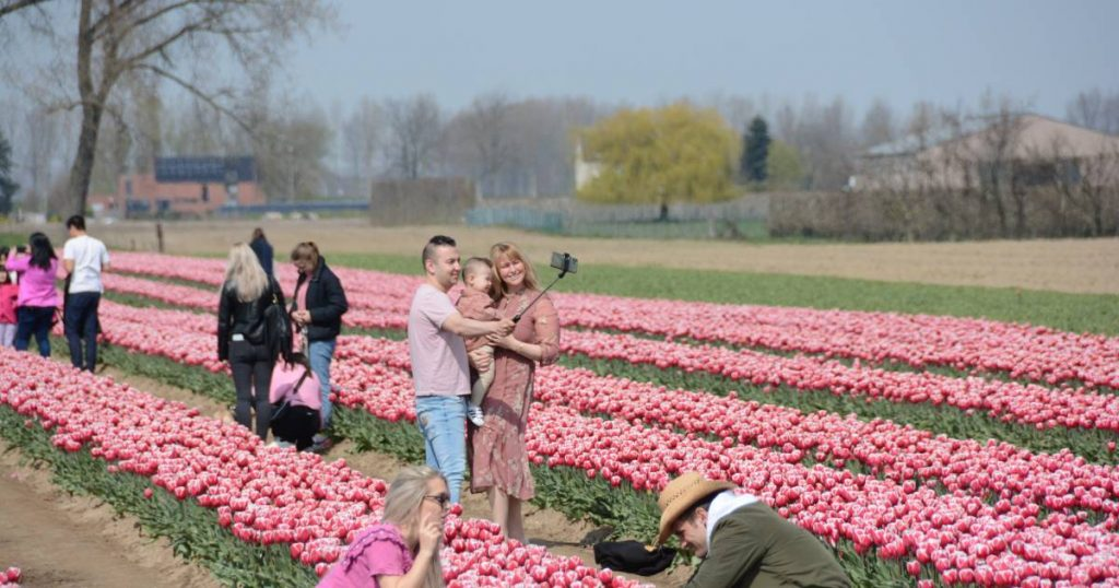 To get a perfect picture, we've been kicking tulips flat for a while |  The interior