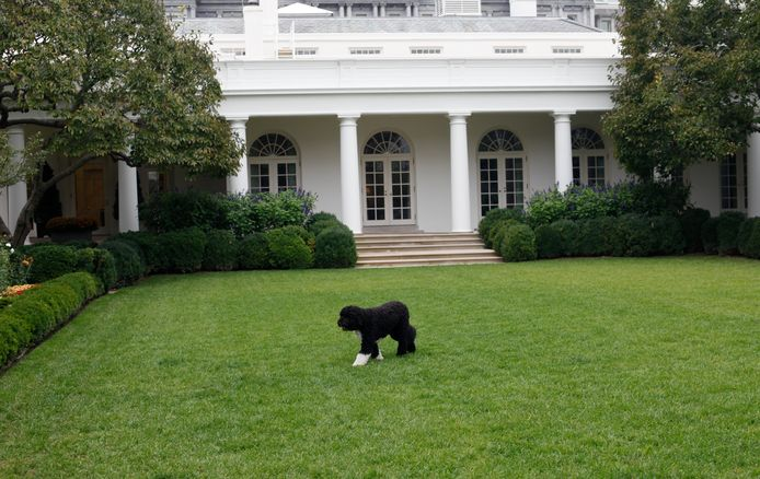 Poe in 2011 on the White House lawn.