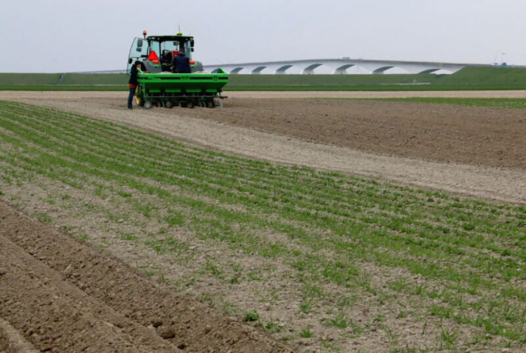 Ribbon planting as an option to reduce chemicals