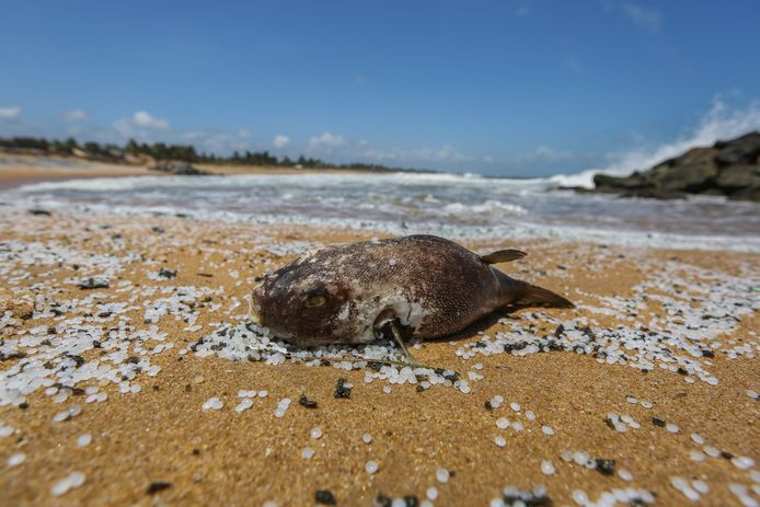 Many dead animals washed up on the beach.