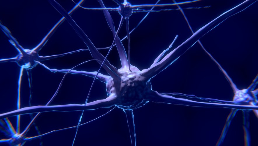 A study revealed that the virus can infect nerve cells