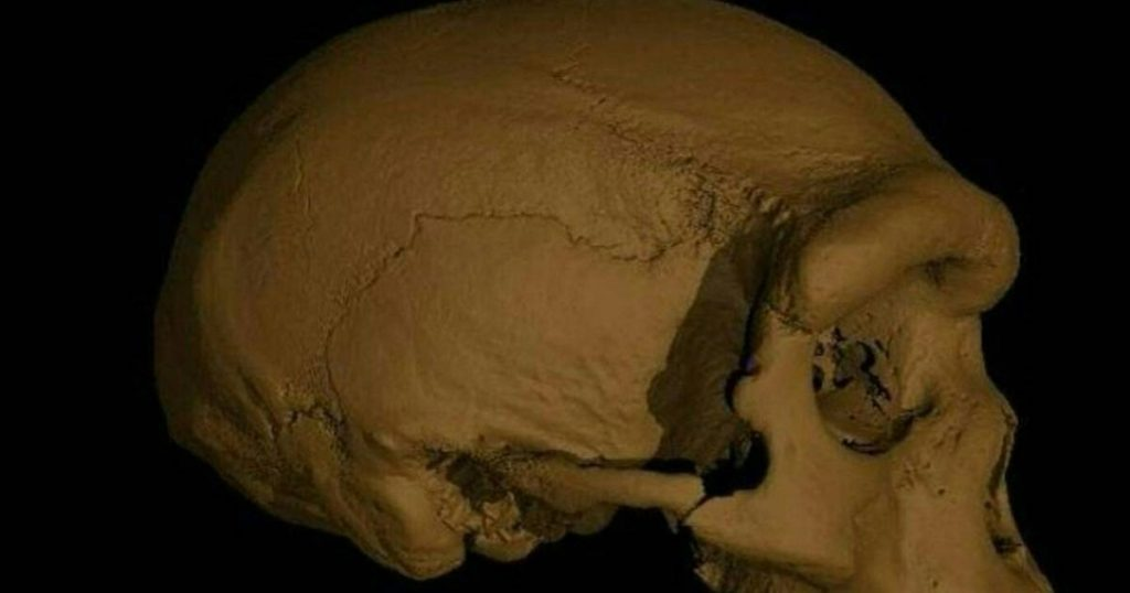 A new study finds that a new species of prehistoric hominins is closer to us than Neanderthals.