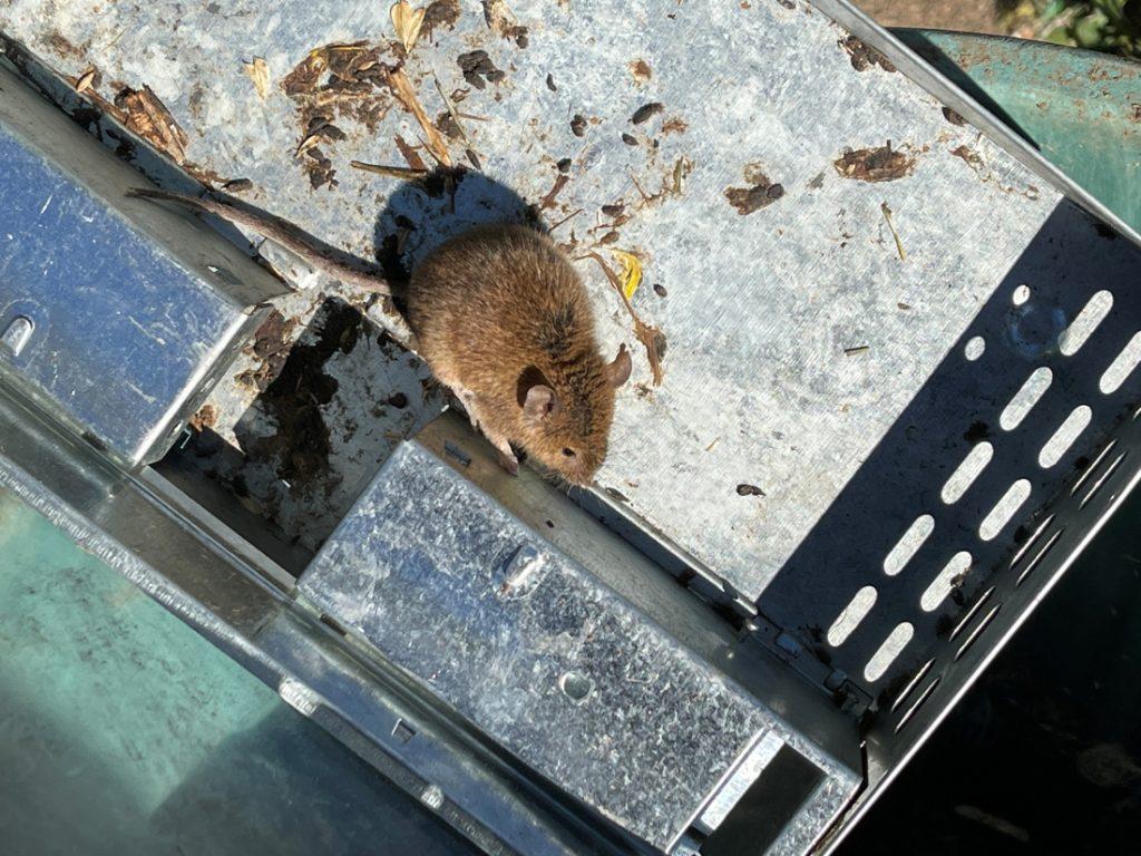 Australian prison expelled for rat infestation