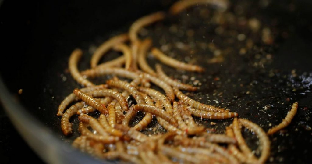 Research has proven that mealworms are a good alternative to dairy products  Science