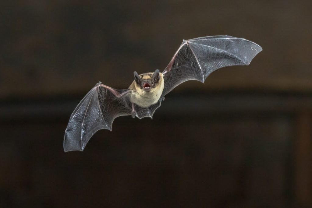 Nebraska Zoo urges nearly 200 guests to shoot rabies after exposure to wild bats