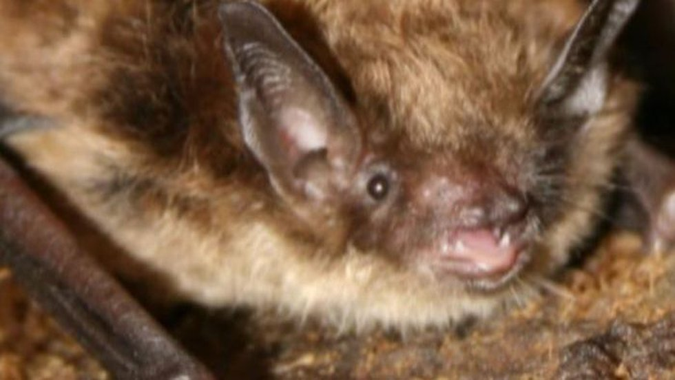 A wild rabid bat was found at the Henry Doorly Zoo in Omaha