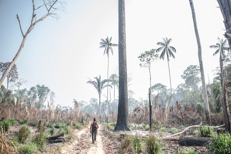 An alarming shift in the Amazon: Part of the forest now emits more carbon dioxide than it absorbs