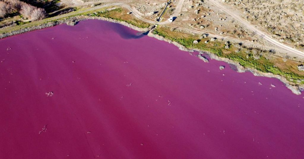 Lake in Patagonia turns pink due to pollution    science and planet