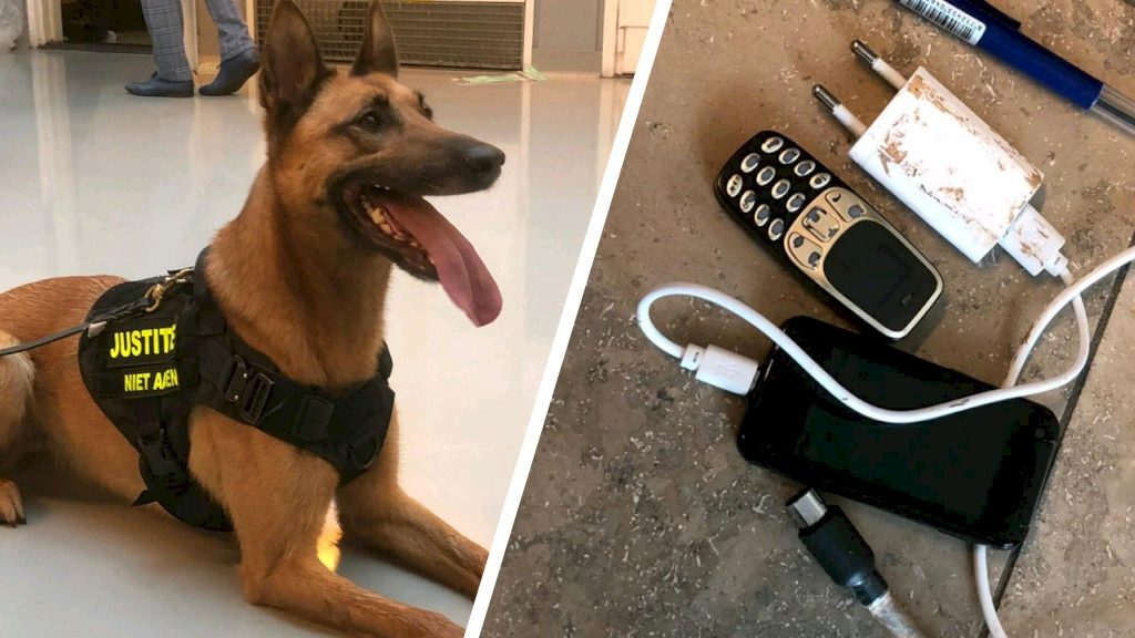 'Mini Phones' appear in prison: Found by private phone dogs كل