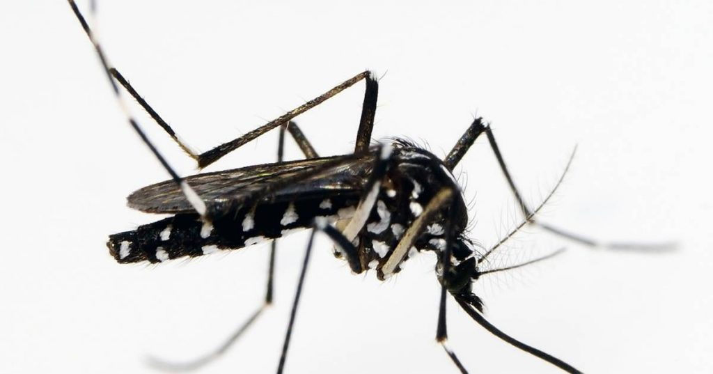 Three types of dangerous mosquitoes appear in the Netherlands |  interior
