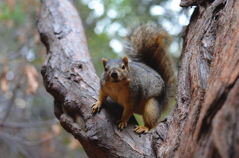 How do squirrels know to jump away into a branch?  Researchers reveal the secret