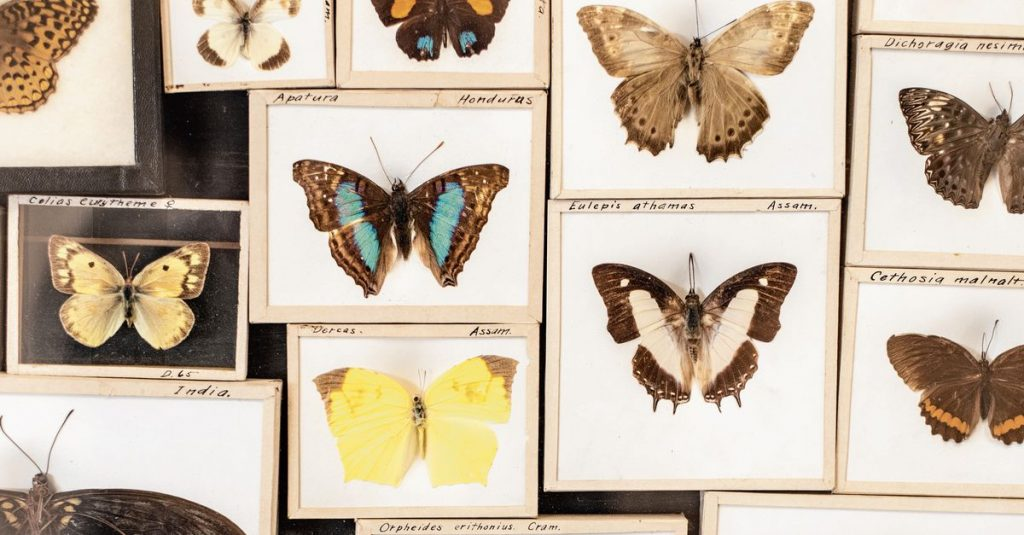 Commonly collected species are also numerous in nature