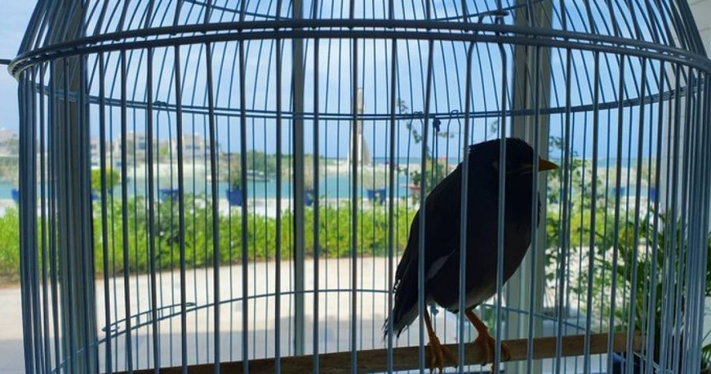 The French ambassador saves a bird from an Afghan girl and shares a touching story |  Abroad